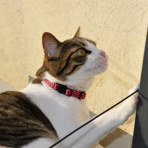 Collar gato red and dots 3